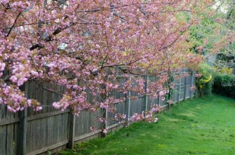 backyard, early April