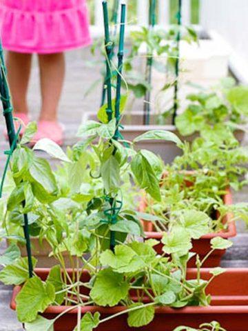 How to Grow an Edible Garden Basics 780 _ Umami Girl