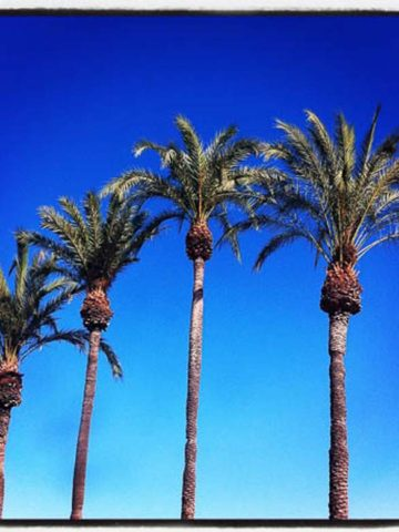 Palm Trees Malaga Spain 780 | Umami Girl