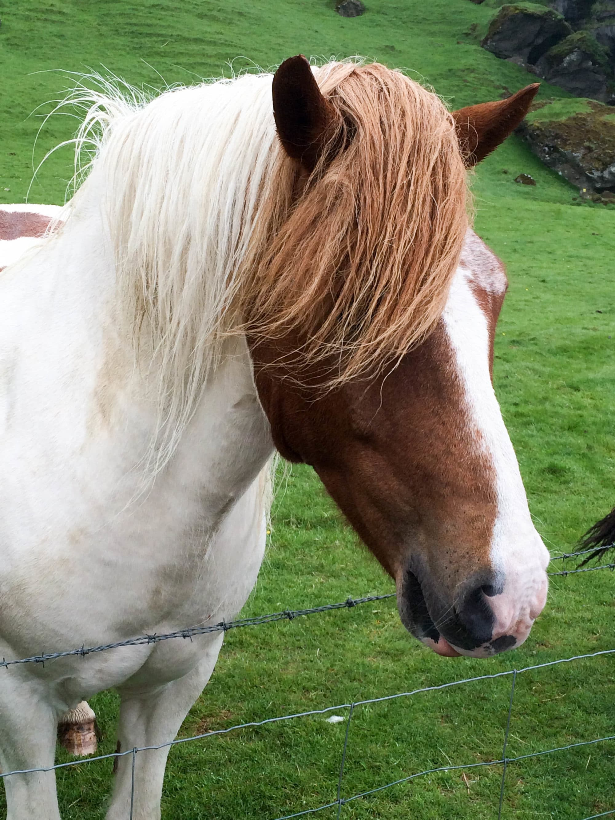 Wild Horse Iceland | Umami Girl