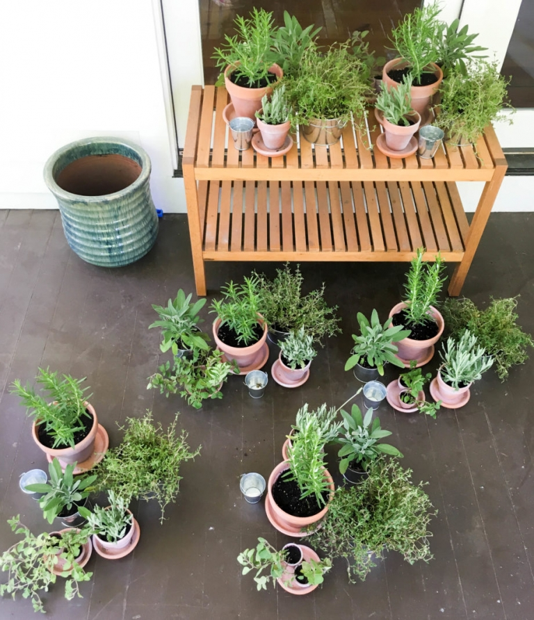 Easy Potted Herb Centerpieces | Umami Girl