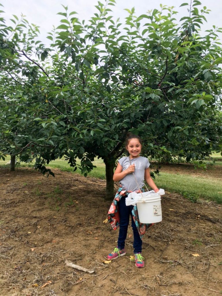 Battleview Orchards Sour Cherry Picking | Umami Girl