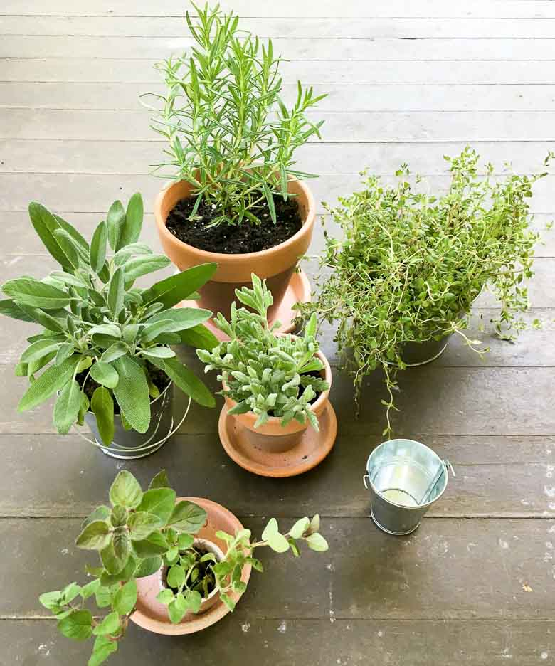 Potted Herb Centerpieces 780 | Umami Girl