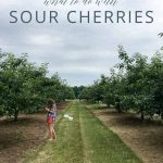 What to Do with Sour Cherries _ Umami Girl PIN