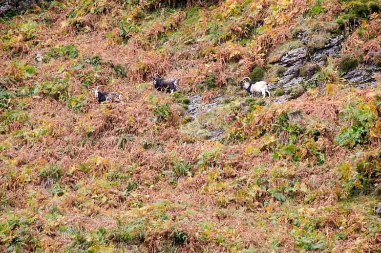 Glendalough Wicklow Ireland 780 | Umami Girl-28