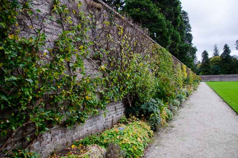 Glendalough Wicklow Ireland 780 | Umami Girl-33