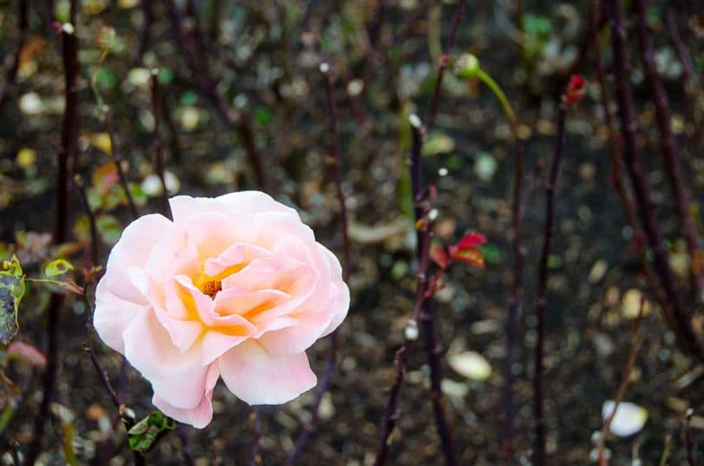 Glendalough Wicklow Ireland 780 | Umami Girl-34
