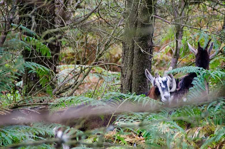 Glendalough Wicklow Ireland 780 | Umami Girl-42