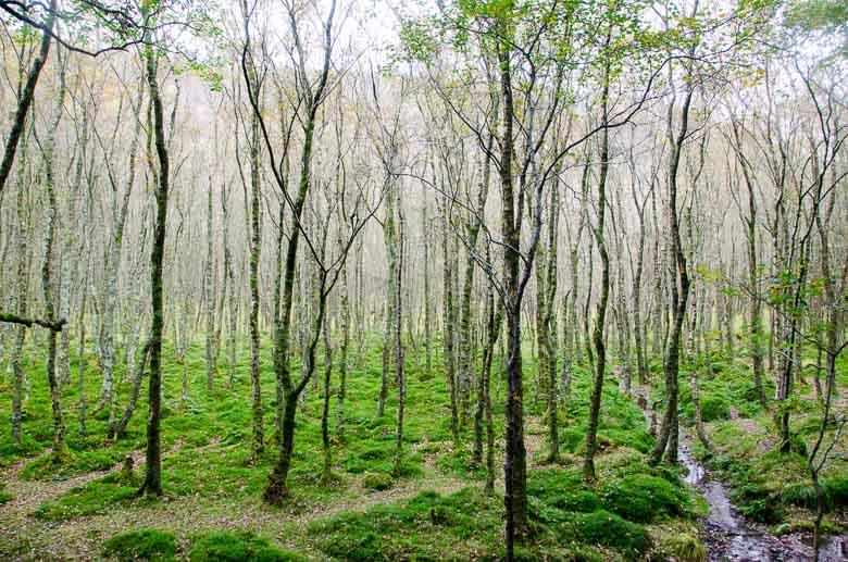 Glendalough Wicklow Ireland 780 | Umami Girl-6
