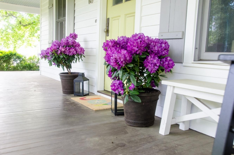 Easy Spring Porch Update with Monrovia Colorful Plants | Umami Girl