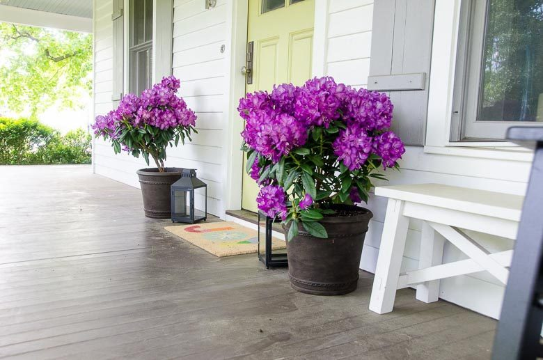 Easy Spring Porch Update Monrovia Colorful Plants 780 | Umami Girl