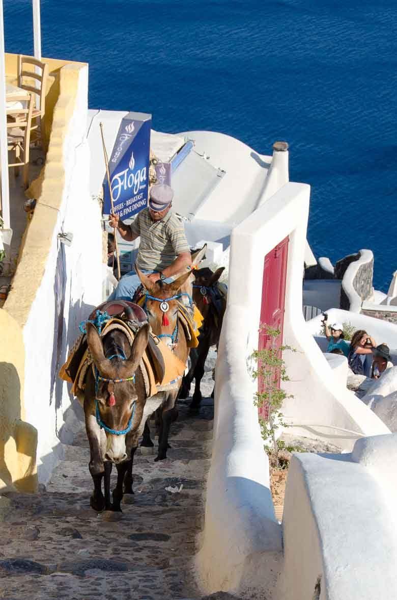 Oia Village Santorini Greece Donkeys 780 | Umami Girl