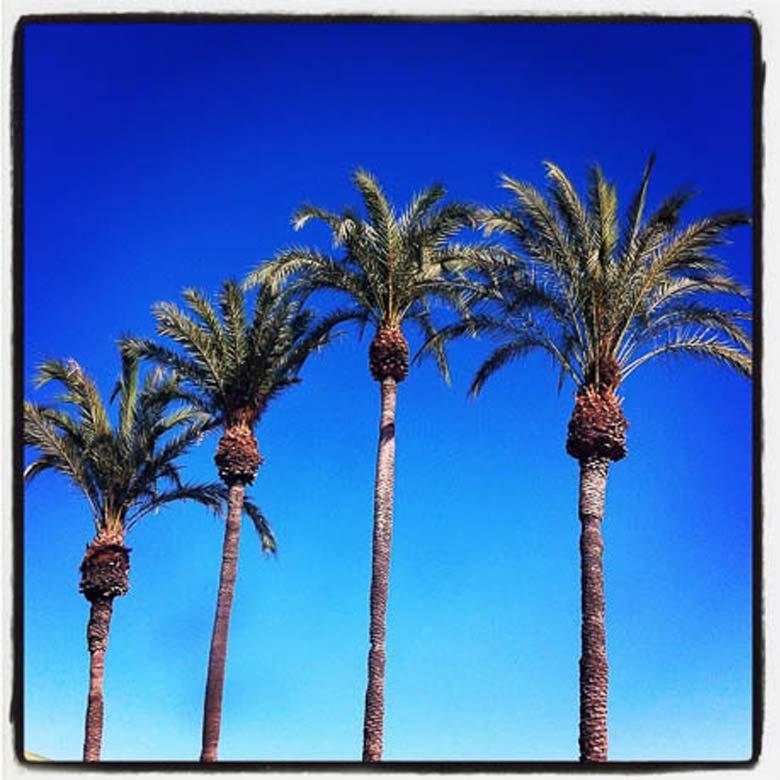 Palm Trees Malaga Spain 780 | Umami Girl