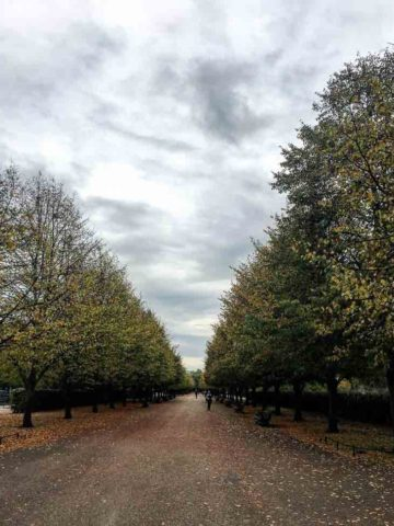 Regents Park 780 | Umami Girl