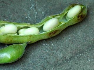 Alice Waters' Fava Bean Puree