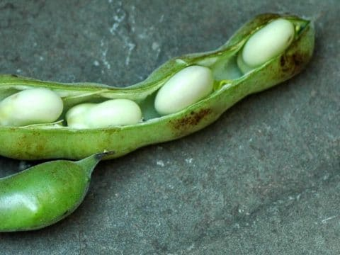 Alice Waters Fava Bean Puree | Umami Girl 780