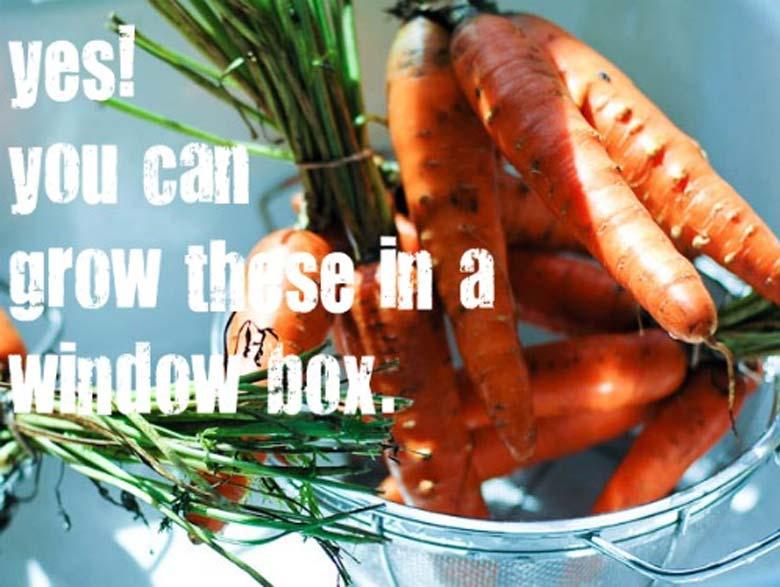 Window Box Gardening Basics 780 _ Umami Girl