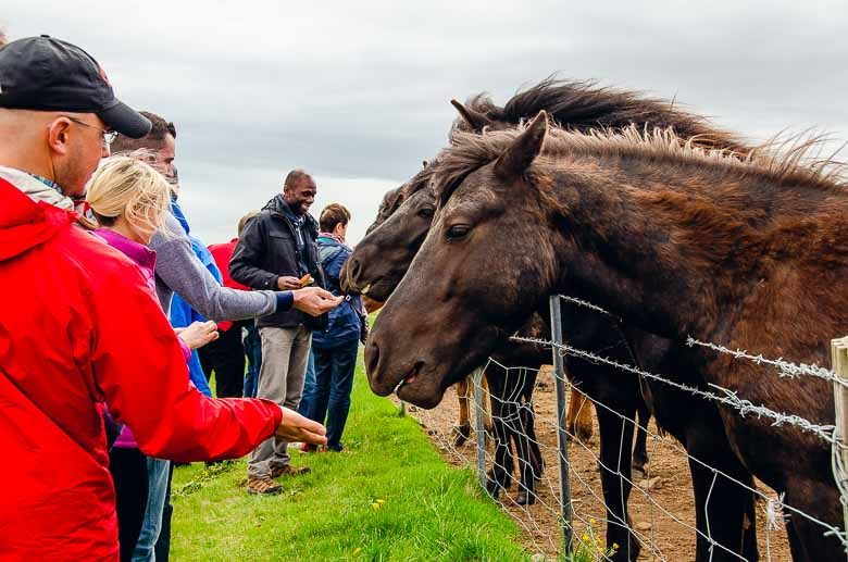 Feeding Wild Horses Iceland South Coast Golden Circle 780 | Umami Girl