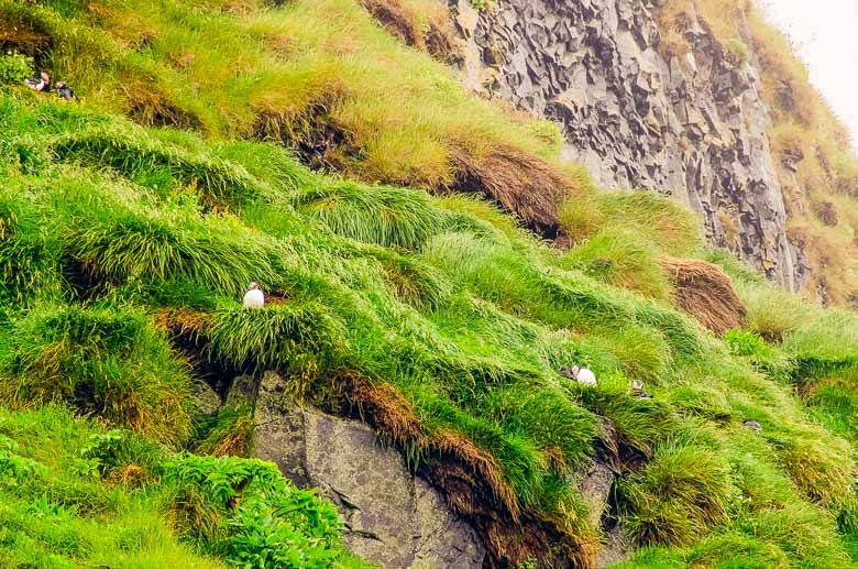 Puffins at Reynisfjara Black Sand Beach Vik Iceland South Coast Golden Circle 780 | Umami Girl