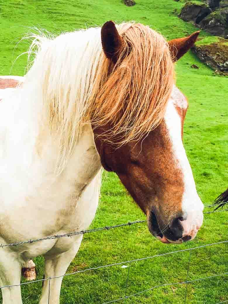 Wild Horse Iceland South Coast Golden Circle 780 | Umami Girl