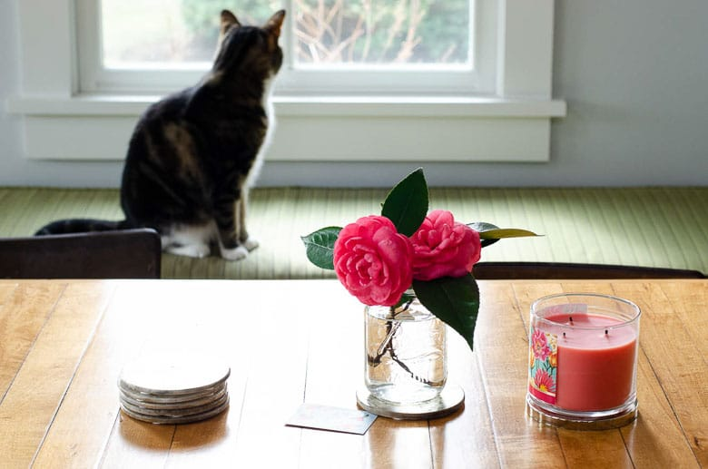 Cat looking out window with flowers in foreground | Umami Girl