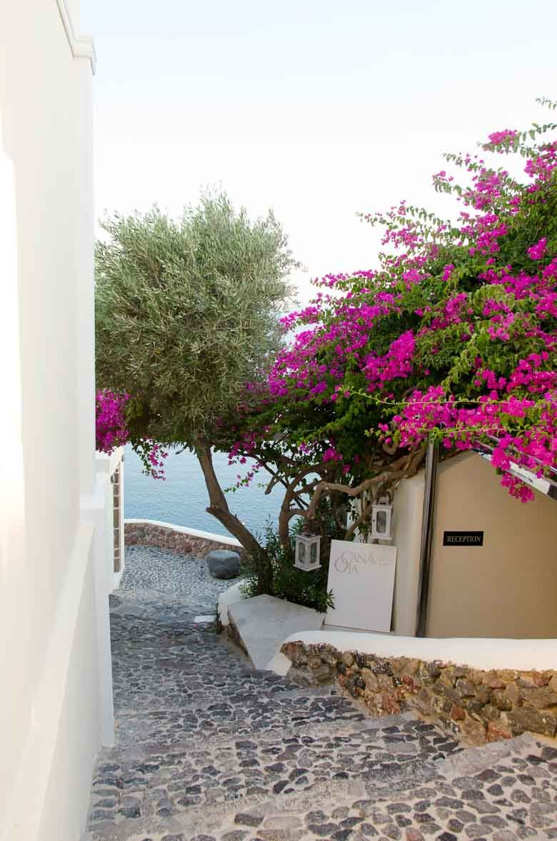Oia Village Santorini Greece Purple Flowers 780 | Umami Girl