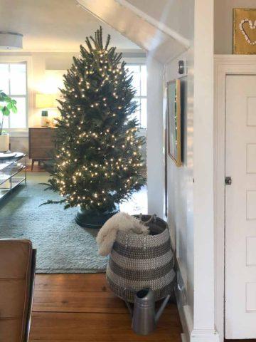 Krinner Tree Genie XXL Christmas Tree Stand