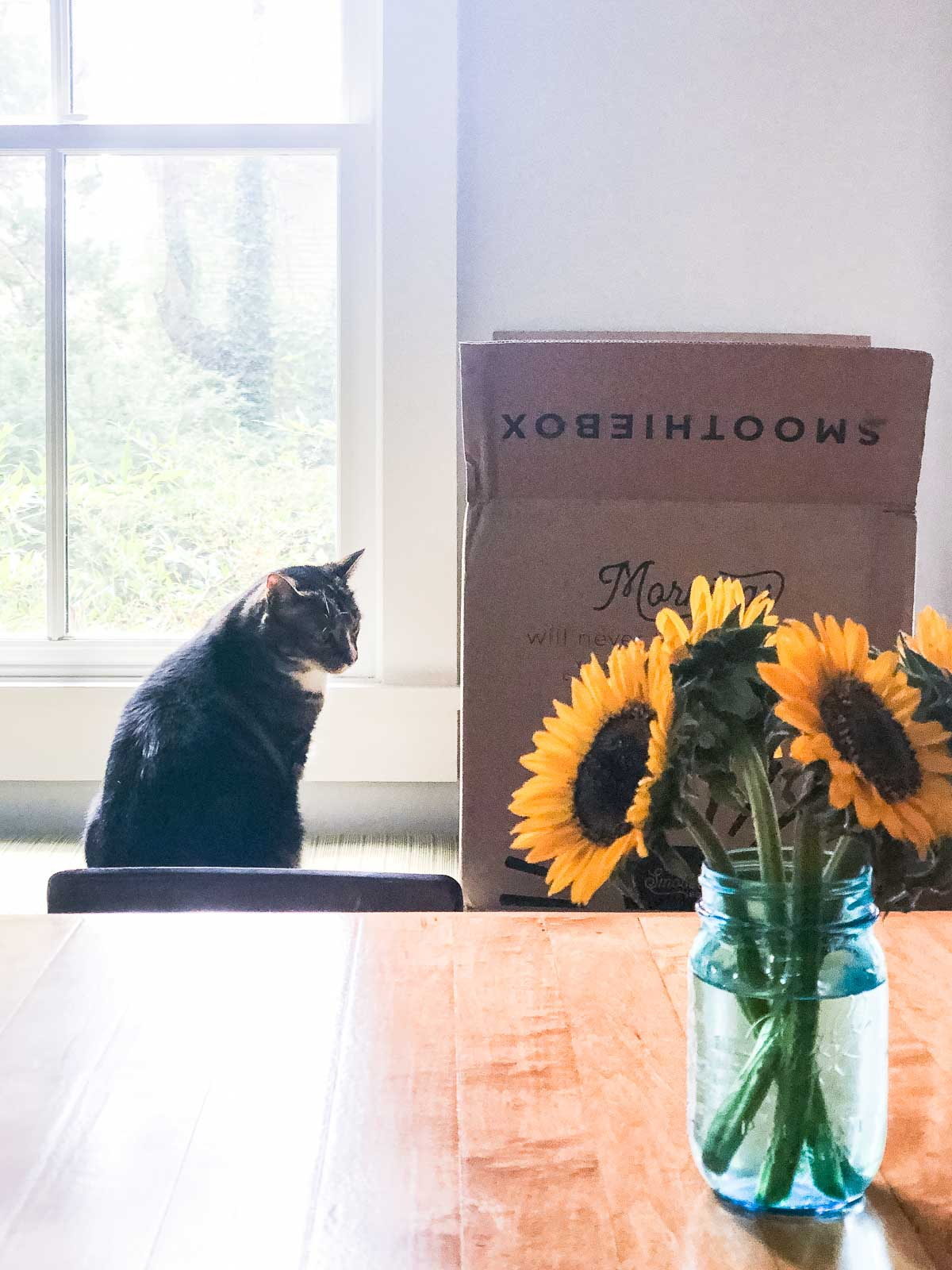 Sunflowers with smoothie box and a cat in the background