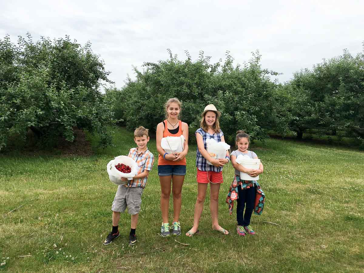 four children in a cherry orchard holding buckets